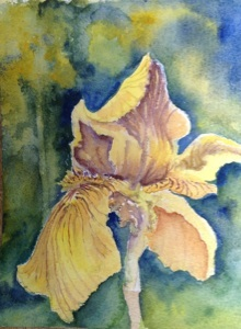 "Single Yellow Iris  5""x 7"", Watercolor, 2013"