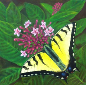 butterfly MED